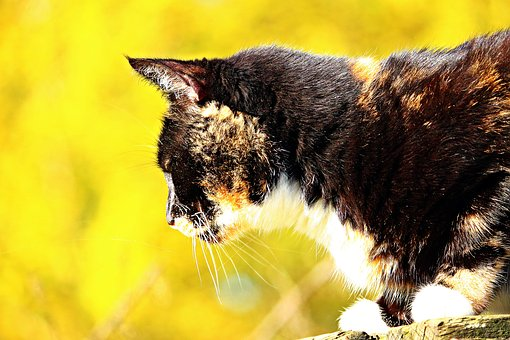 Cat, Lucky Cat, Three Coloured, Autumn, Leaves, Mieze