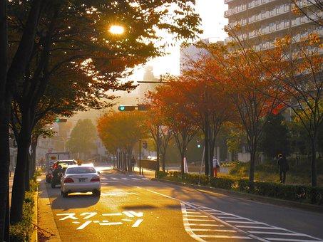 Autumn, Sunset, Autumnal Leaves, Street Trees, Road