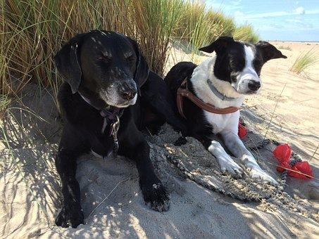 Dogs, Dunes, Beach, Sand, Coast, Marram Grass, Nature