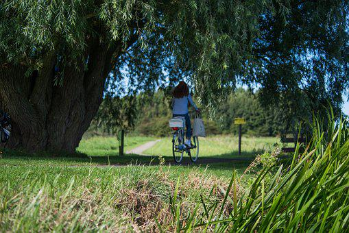 Bicycle, Woman, Park, Green, Bike, Cycling, Healthy