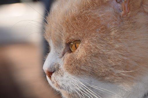 Cat, Head, Cat Face, Close Up, Domestic Cat, View