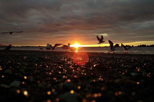 Sky, Cloud, Sea, Beach, Sunset, At Dusk, Seagull