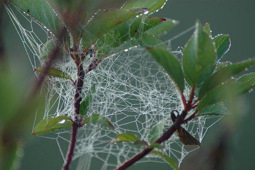 Web, Jumble, Spider, Drops, Dew, Bush, Nature, Trap