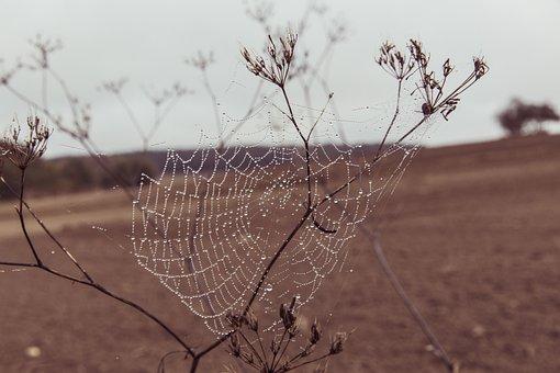 Cobweb, Web, Spider, Nature, Case, Dewdrop