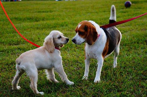 El Salvador, Walk, Park, Dogs, Puppies, Pets, Grass
