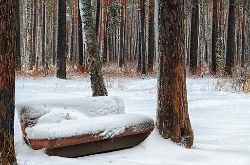 Winter, Sofa, Forest, Tree, Trees, Nature, Tree Trunks
