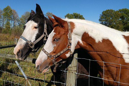 Horse, Animal, Mammal, Equine, Friendship, Equestrian