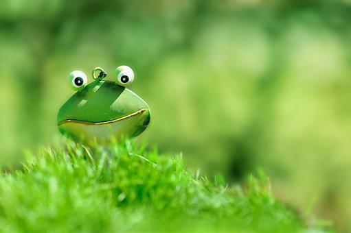 Frog, Green, Green Frog, Grass, Close Up, Toad, Bright
