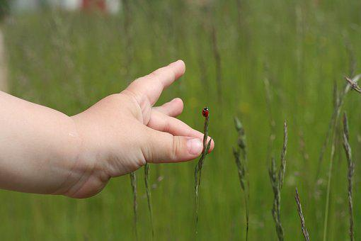 Ladybug, Grass, Green, Red, Hand, Child, Palm, Meadow