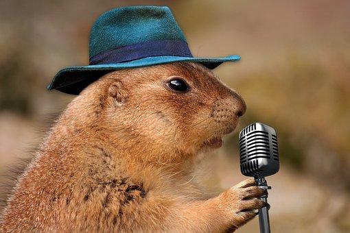 Prairie Dog, Singing, Musical Rodent, Nature, Animal