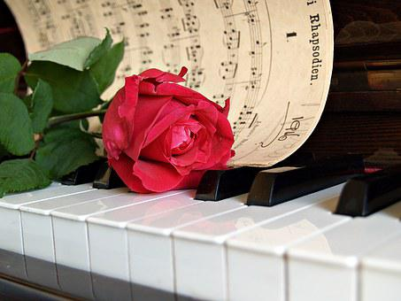Rose, Red, Sheet Music, Piano, Old, Vintage, Antique