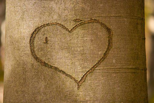 Heart, Tree Bark, Romance, Romantic, Tree, Carved, Love