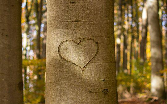 Heart, Tree, Scratch, Tree Heart, Bark, Love, Nature