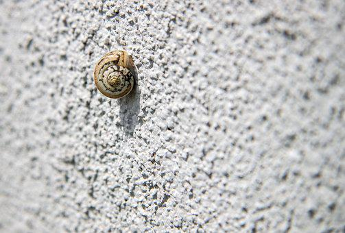 Snail, Snail On The Wall, Loneliness, Testing, Power