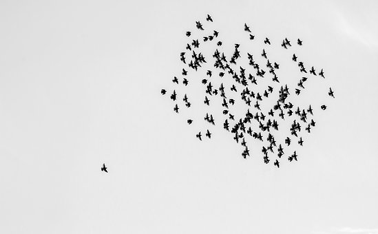 Birds, Swarm, Flock Of Birds, Sky, Alone