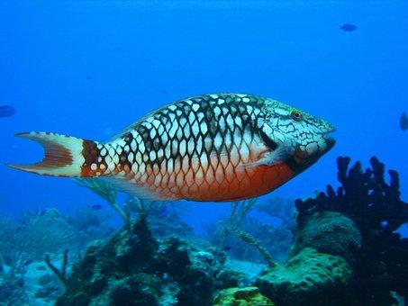 Diving, Ocean, Coral, Sea, Water, Tropical, Dive