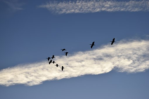 Herons, Birds, Egrets, Wildlife, Tropical, Waterbird