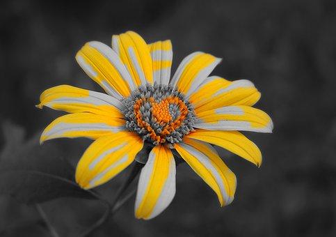 Flowers, Yellow, Splash, Wildflowers, Vietnam, Gemstone