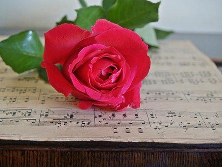 Rose, Red, Sheet Music, Old, Vintage, Antique, Leaves