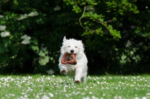 Small Dog, Funny Dog, Sweet, Playful, Funny, Attention