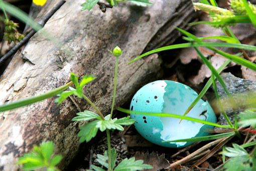 Blue, Eggs, Measured Praised, Hatched, Measured Raged