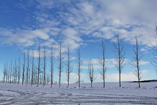 White, Blue Sky, Blue, Sky, Snow, Winter, Cold