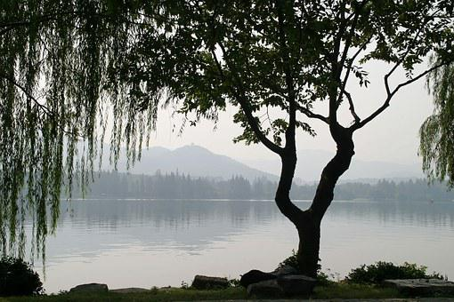 China, Tree, Weeping Willow, Leaves, Gingko, Ginko