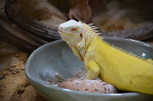 Reptile, Terrarium, Animal, Lizard, Close Up, Head