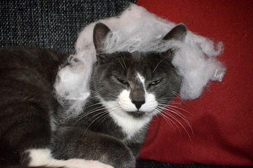 Cat, Trouble, Sour, Grim, Pet, Animal, Mammal, Kitten