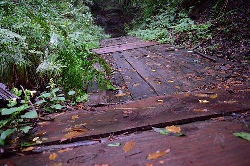 Wood, Nature, Tabitha, Wipes, Peel, Gil, Bark