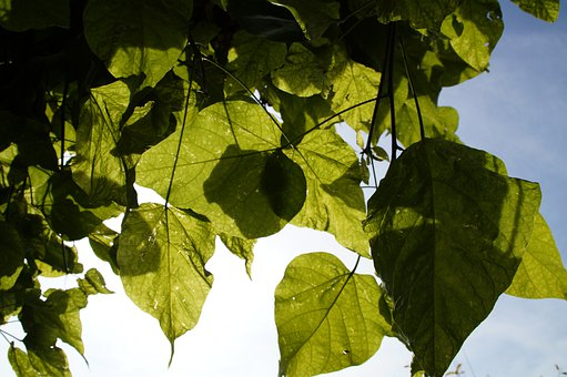Leaves, Light, Shadow, Autumn, Shades Of Green, Sky