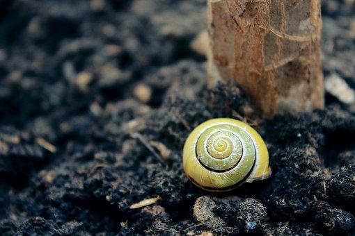 Snail, Shell, Mollusk, Close, Slowly, Snail Shell