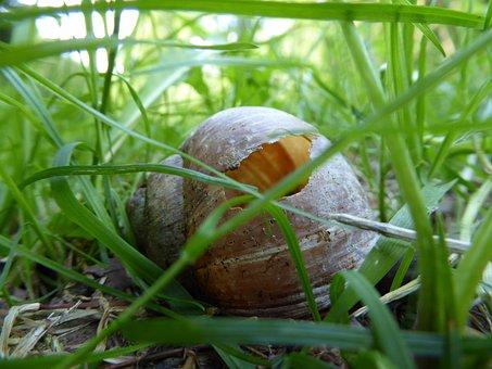 Shell, Snail, Snail Shell, Vacancy