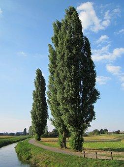 Populus Nigra, Tree, Poplars, Way, Footpath, Stream