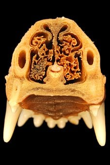 Nose, Tooth, Anatomy, Dog, Veterinary Medicine