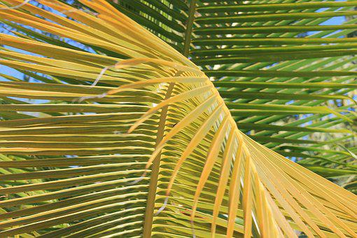 Palm, Vacancy, Tropics, Green