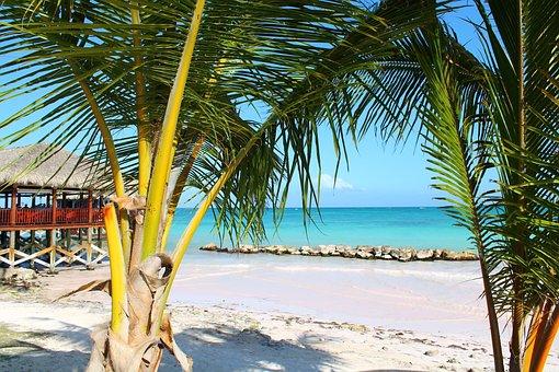 Palm, Vacancy, Tropics, Landscapes, Beach, Island