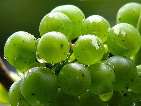 Grapes, Vine, Wine, Green, Winegrowing, Green Grapes