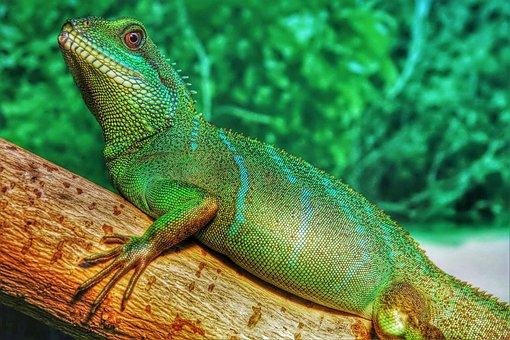 Chinese, Water, Dragon, Asian, Green, Reptile, Animal
