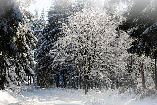 Winterimpression, Snow, Winter Impressions, Winter