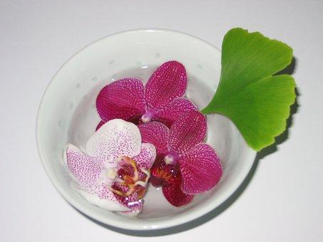 Bowl, Orchid, Gingko, Zen
