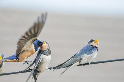 Bird, Wildlife, Animal, Wing, Nature, Feather, Beak