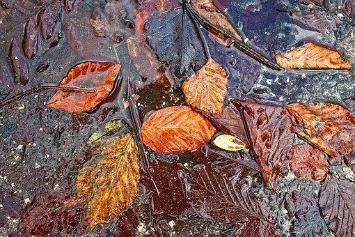 Leaf, Autumn Leaf, Autumn, Puddle, Leaves In Puddle