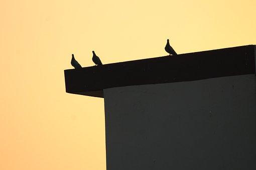 Pigeon, Columba Livia, Overexposed, Bird, Animal