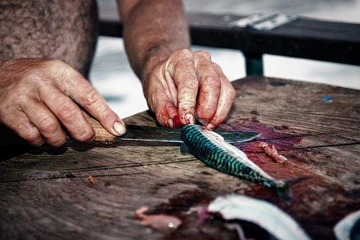 Fisherman, Fish, Mackerel, Gutting, Cutting, Boat