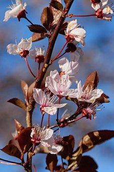 Flower, Tree, Nature, Plum, Branch, Plum Blossom