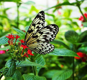 Butterfly, Insect, Nature, Wing, Summer, Flower