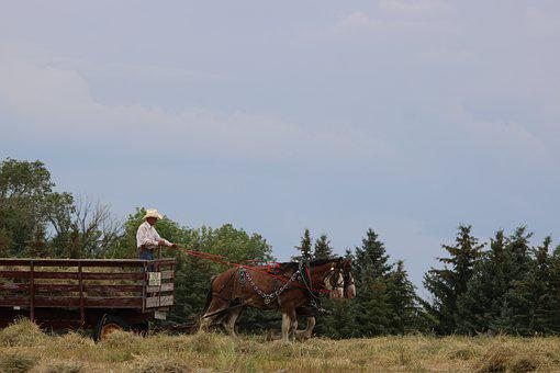 Outdoors, Nature, Sky, Farm, Agriculture, Horses, Cart