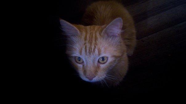 Cat In The Dark, Cat, Pet, Portrait, Eye