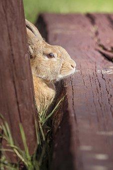 Rabbit, Ears, Footbridge, Nature